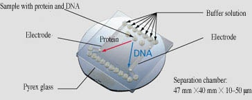 DNA Separation/Extraction Module